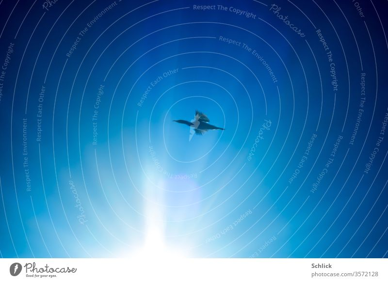Bird duck flies in front of a blue sky past a bright sun birds Flying Sky Sun Blue Sunbeam Duck Tall rays Bright Light Freedom White Glistening Radiation Warmth