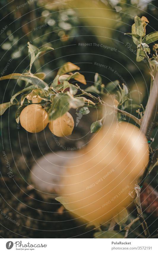 #As# lemons in the garden Lemon yellow Lemon juice Lemon tree Lemon leaf Yellow Garden green Extend reap Vitamin C fruit Colour photo Shallow depth of field