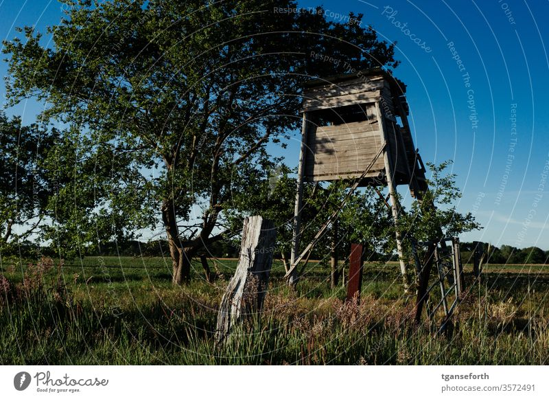 Hunting pulpit in the evening light Hunting Blind Landscape Hunter Colour photo wood Exterior shot Field hide Evening Dusk tree green Nature Deserted
