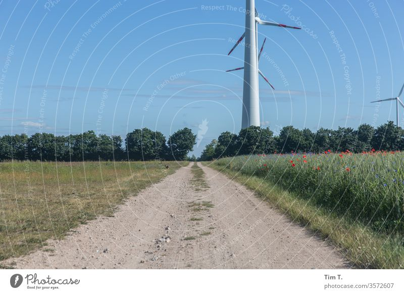 rabbit wind farm Hare & Rabbit & Bunny Field Lanes & trails Exterior shot Animal Day Wild animal Deserted Environment Meadow Landscape Colour photo Nature 1