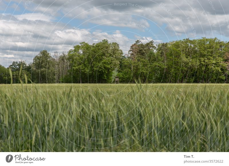 Brandenburg Grain Field grain Summer Sky Agriculture Ear of corn green Cornfield Nutrition ecologic Environment Grain field Exterior shot Growth Plant