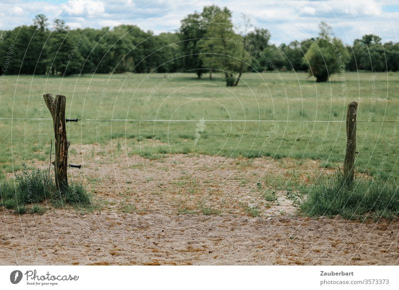 Green pasture, band between the wooden posts of an electric fence, sand, meadow and bushes Willow tree Meadow Fence Electrified fence green Field Band country