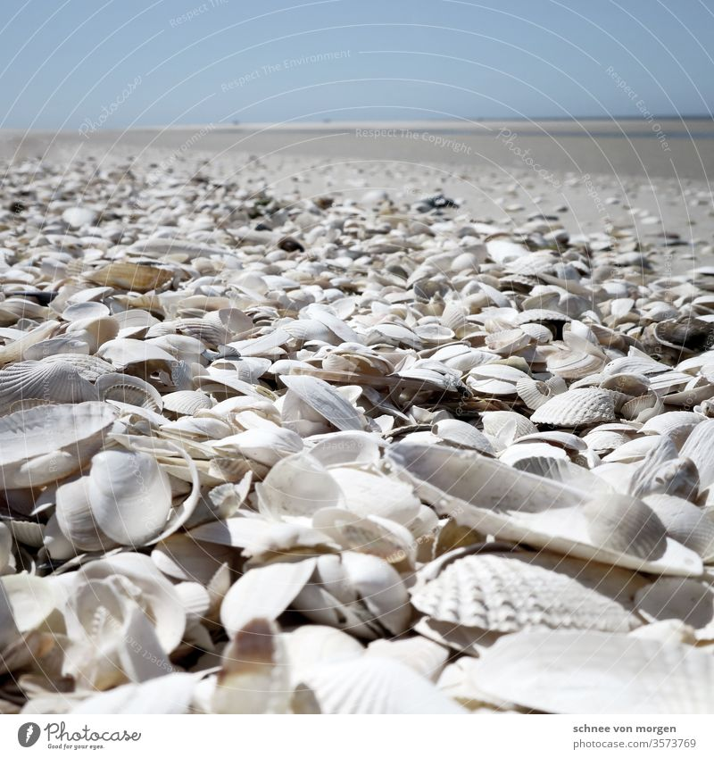 white shells on the beach seashells Ocean wide Horizon Sky Sand Beach Nature Coast Water Far-off places Waves Vacation & Travel Deserted Relaxation Landscape