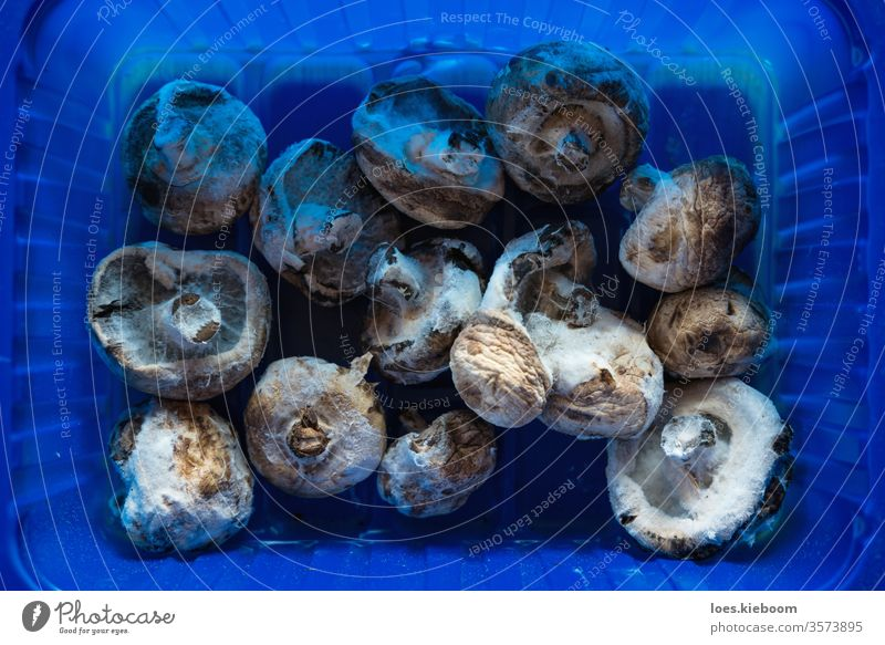 Aerial view of moldy champignon mushrooms in a plastic container symbolizing food waste mildew fungus unhealthy closeup rotten spore fungi organic spoiled macro