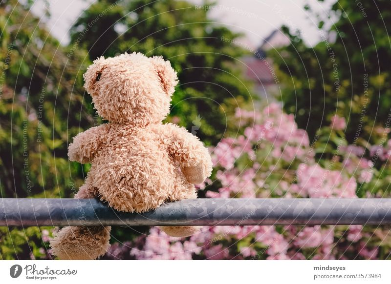 Teddy bear sitting on a pole bleed bush Meditative Exterior shot Infancy Nature Playing Toys teddy Day Cuddly toy Colour photo Sadness Cute Soft Bright outlook