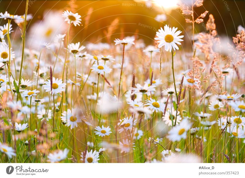 Nature Plant Flower Landscape Blossom Spring Meadow Happy Garden Contentment Field Happiness Joie de vivre (Vitality) Beautiful weather Spring fever Wild plant