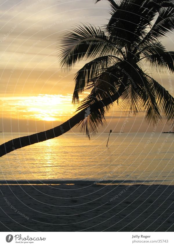 Sunset2 Maldives Beach Palm tree Water