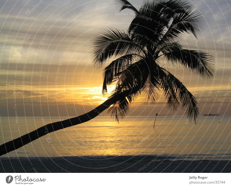 Sunset1 Maldives Beach Palm tree Water