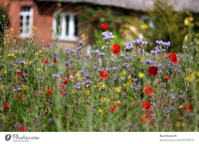 Village green Reet roof Meadow wild flowers Exterior shot Nature Plant spring Summer Garden Blossoming Deserted Grass Colour photo bleed Blur Growth already