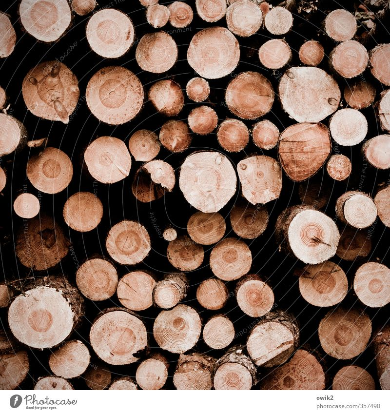 interfaces Agricultural crop Tree trunk Round Many Brown Stack Thin Fat Annual ring Average Colour photo Exterior shot Detail Pattern Structures and shapes