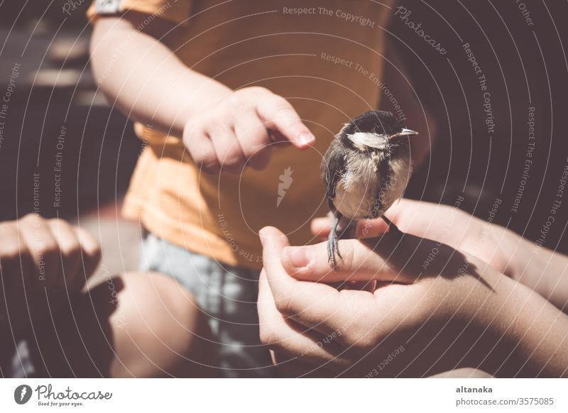 little boy is playing with a chick at the day time. kind child bird hand care animal cute nature outdoors life feather holding finger wildlife people young beak
