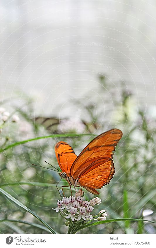 Haute Couture l in butterfly skirt Butterfly butterflies Insect Close-up Animal flowers bleed Orange already variegated Plant Nature natural To feed Foraging
