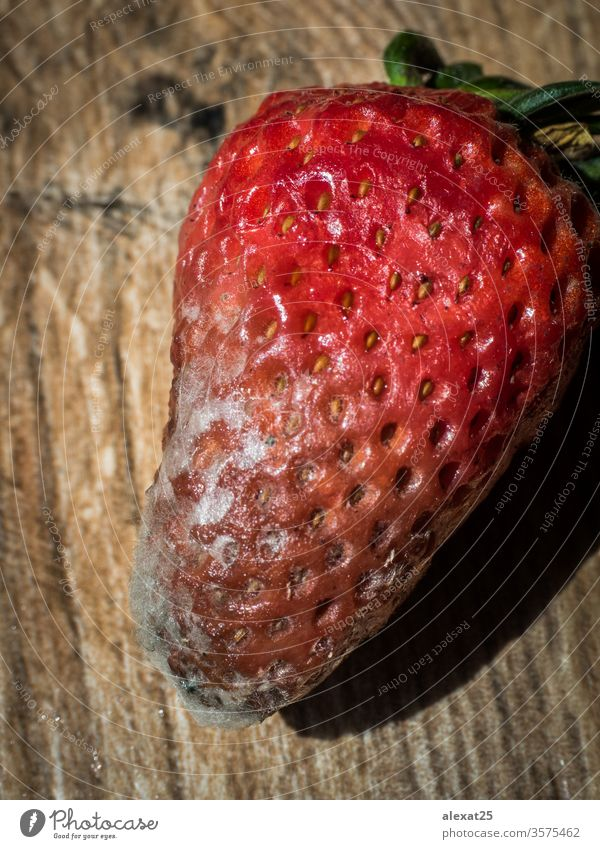 Rotten strawberry on wood background bacterium bad biological closeup decay food fruit fungal fungi fungus garbage macro mildew mold moldy natural nature
