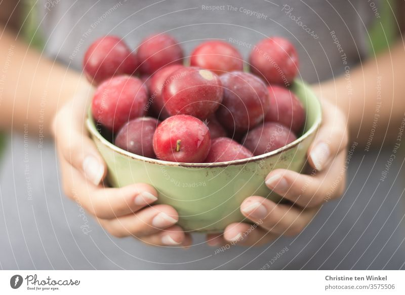 young woman holding a bowl of red fresh plums in front of her Plum fruit Food Fresh Juicy Nutrition Healthy Eating Vegetarian diet Organic produce Red Diet