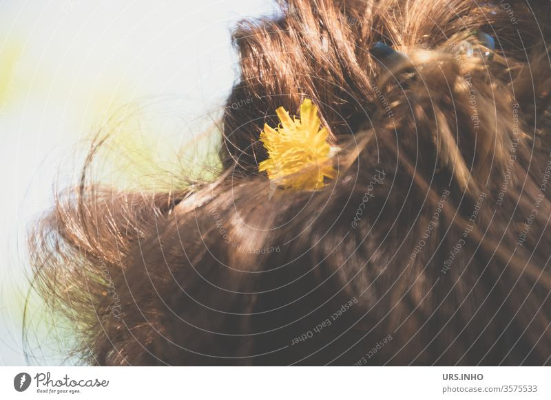Part of a female head from behind with dandelion blossom in brown hair lowen tooth Brown hairstyle Detail Yellow bleed Woman flowers Day Close-up Chignon