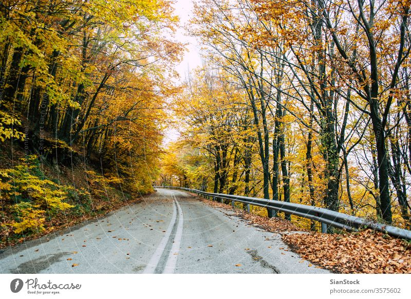 Road in the yellow autumn forest, nature landscape fall tree trees road street leaves background beautiful park foliage season green orange light sun red color