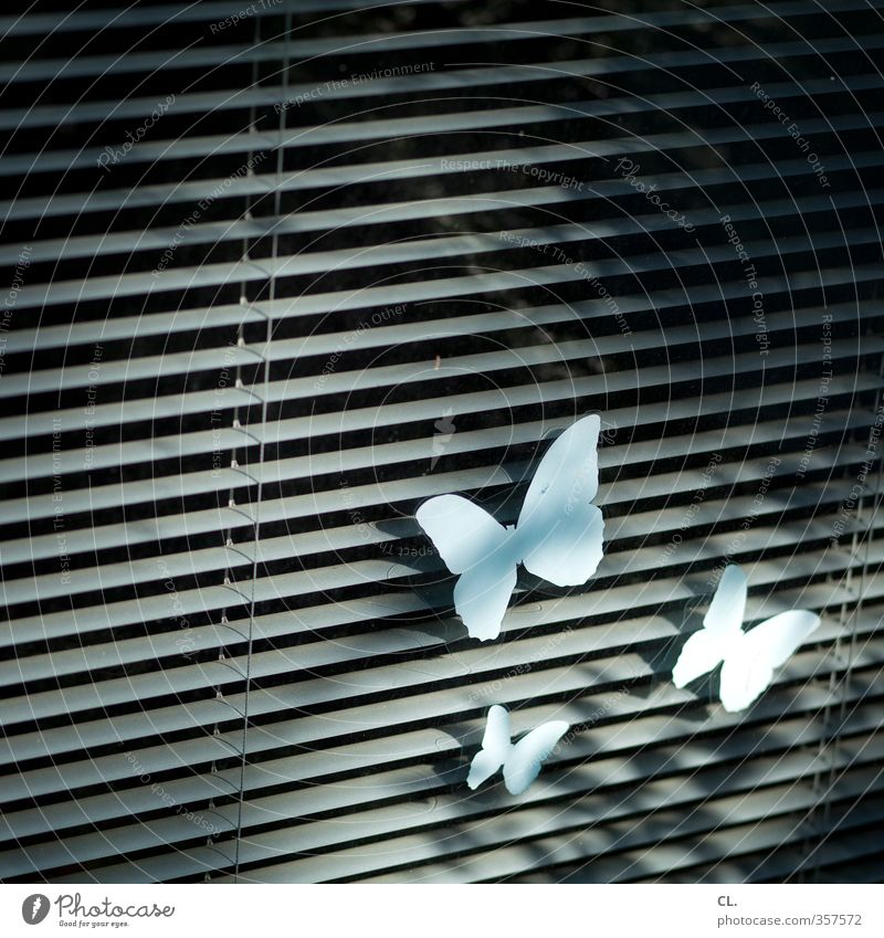 window butterfly Living or residing Flat (apartment) Decoration Window Flying Free Infinity Uniqueness Gloomy Gray Joie de vivre (Vitality) Freedom Ease