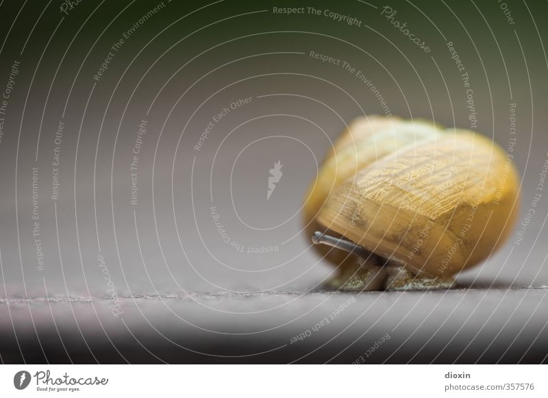 And where's the snow? Animal Snail Snail shell Feeler Mollusk 1 Small Nature Protection Safety Slowly Crawl Colour photo Close-up Detail