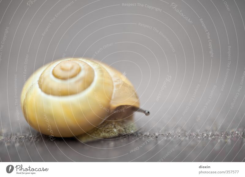 Let's see what's going on outside... Animal Snail Feeler Snail shell 1 Looking Small Natural Curiosity Slimy Interest Fear Nature Protection Colour photo