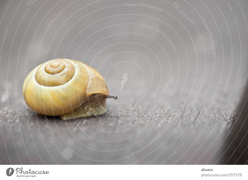 facing the edge Animal Wild animal Snail Feeler Snail shell 1 Threat Nature Protection Safety Slowly Crawl Pests Mollusk Colour photo Exterior shot Close-up