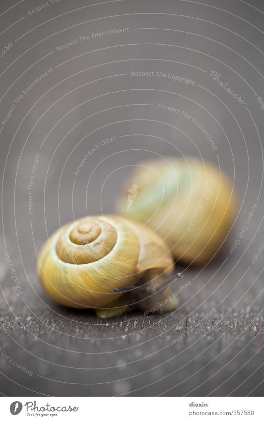 Don't rush me! Animal Snail Feeler Snail shell 2 Serene Nature Slowly Pests Crawl Mollusk Colour photo Exterior shot Close-up Macro (Extreme close-up) Deserted