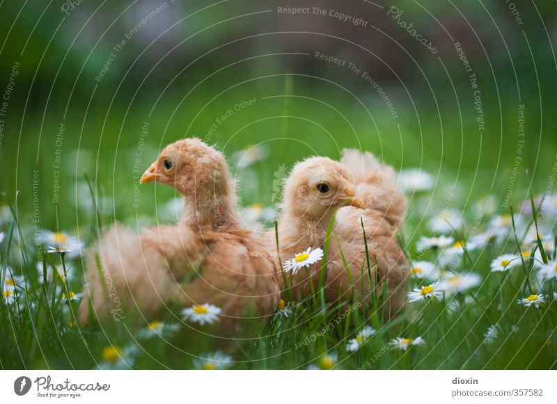 Nature Plant Flower Animal Environment Meadow Grass Natural Bird Agriculture Pet Organic produce Cuddly Forestry Organic farming Farm animal