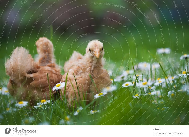 Nature Animal Environment Meadow Baby animal Grass Small Natural Bird Cute Curiosity Farm Pet Organic produce Cuddly Organic farming