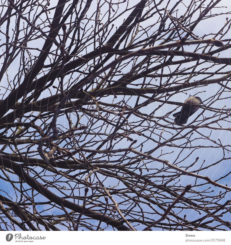 Just chill. spring Sky Overview Worm's-eye view Free Wild animal Animal birds Crow Bird in a tree bare tree Treetop Branchage Twig Twigs and branches