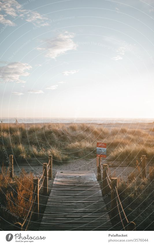 #As# Tomorrow on the beach dune Marram grass dunes dune landscape Dune crest dune protection dune path dune 45 Lanes & trails vacation Vacation mood