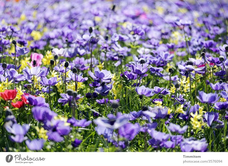 Many flowers and blossoms as a mood enhancer Flowering plant Blossom leave Grass Blue Violet Red Yellow green motley Nature Colour photo Moody