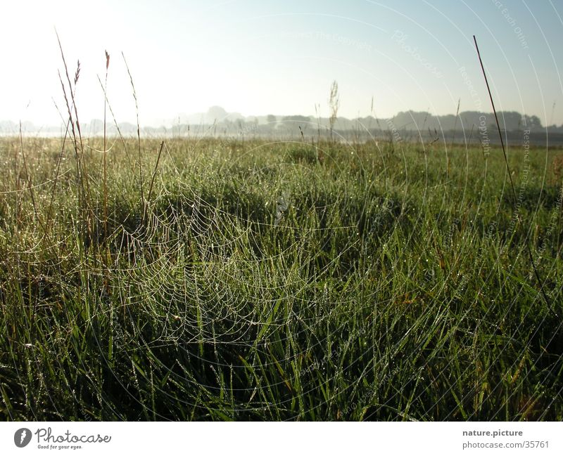 Sun Meadow Grass Drops of water Dew Blade of grass Elbe Spider's web Rich pasture