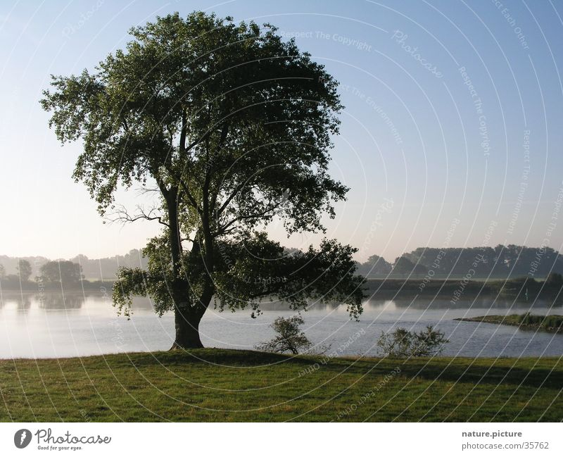 Tree Meadow Fog Electricity River Pasture Elbe Blue sky Rich pasture Poplar