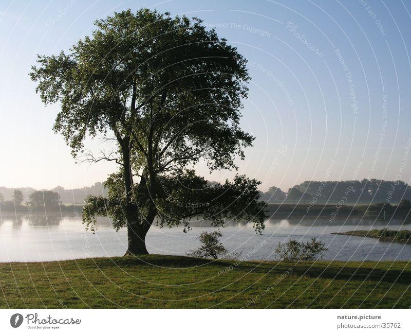 Tree Meadow Fog Electricity River Pasture Elbe Blue sky Rich pasture Poplar