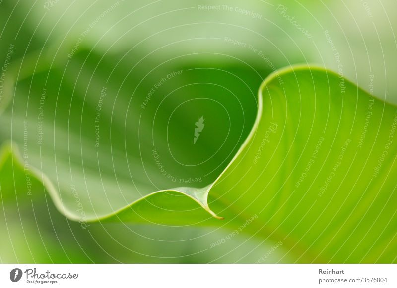 Blossom of Life Spring Blooming Nature Green Flower Plant Floral Fresh Natural Garden Close-up Leaf Beauty Photography Colour photo background Blossom leave