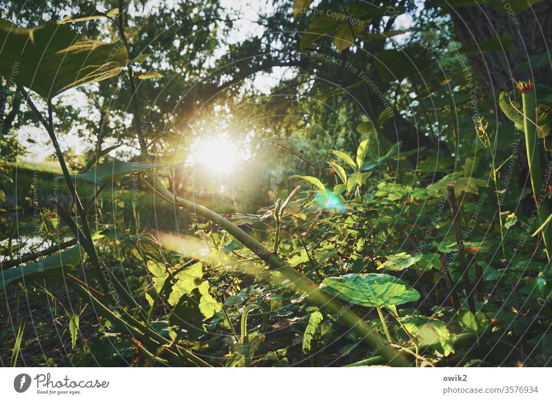 undergrowth forest soils Under plants Nature Sun Sunlight Back-light Brilliant Illuminate Sunset Evening Mysterious leaves Twigs and branches Exterior shot