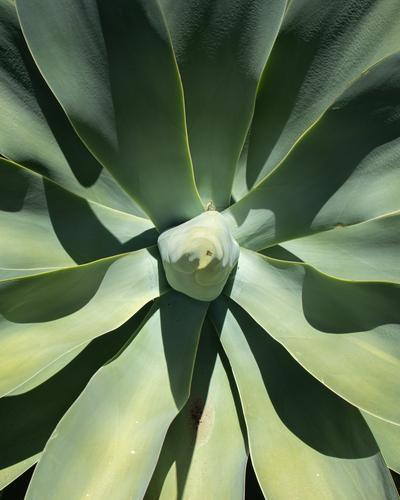 Super zoom of an exotic flower Nature Flower Plant Botanic Desert Volcanic Lanzarote Wild