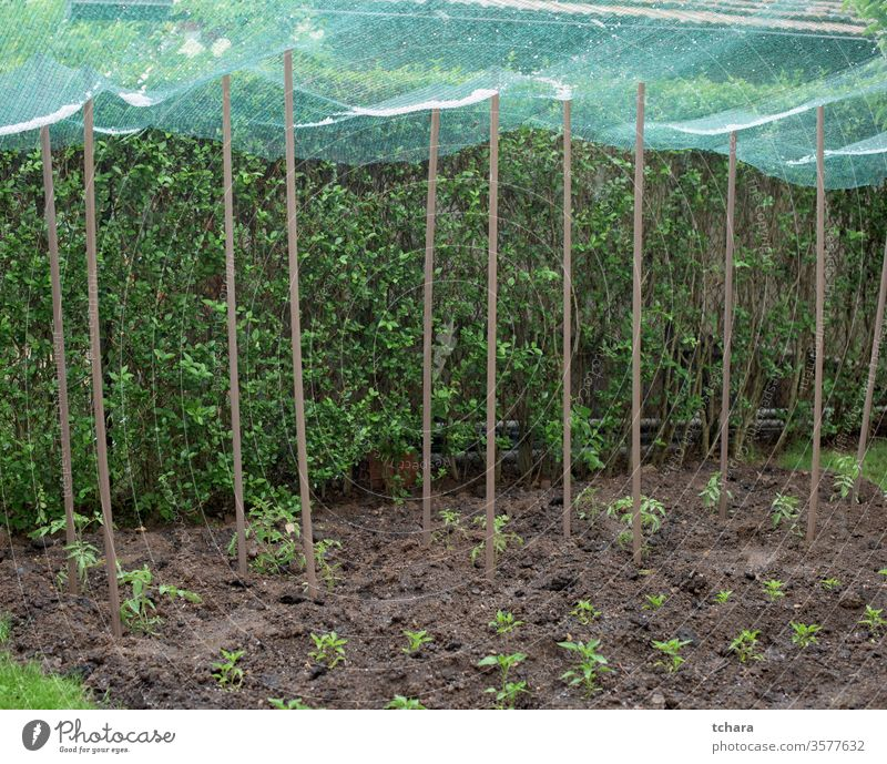 Hailstone in a protective net over vegetable plants hail shielded covering shelter bad production rural protection summer agriculture spring plantation