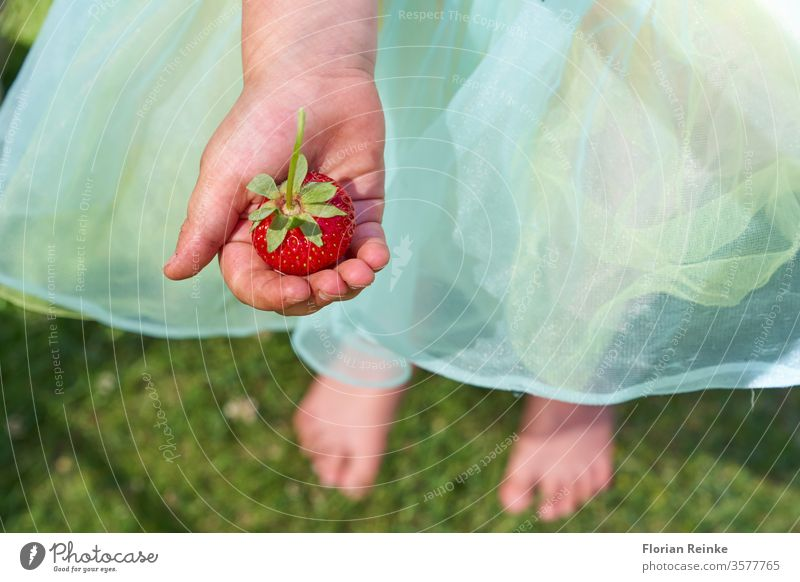 Four year old girl with a tulle skirt holds a strawberry in her hand childhood young food fruit outdoors summer caucasian happy cute person design beautiful