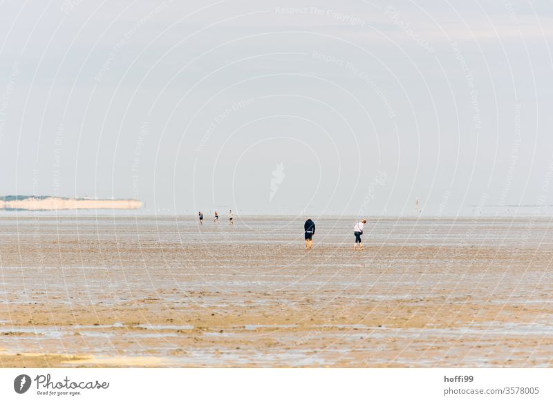 People in the mudflats - mudflat hiking in the North Sea mudflat hiking tour Walk along the tideland Mud flats Low tide ebb and flow Beach Water Coast Sand