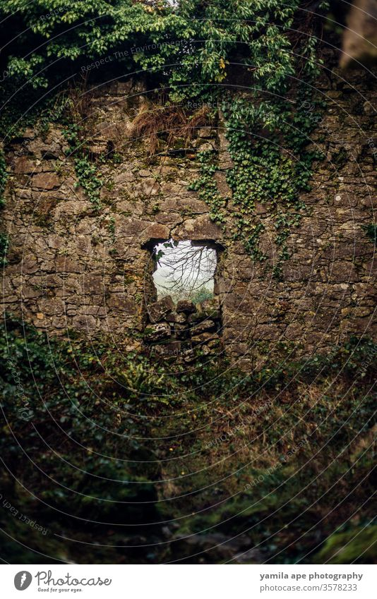 ireland historic castle window in the forest galway castle wall castle ruin ancient Exterior shot Colour photo Old Tourist Attraction Historic architecture