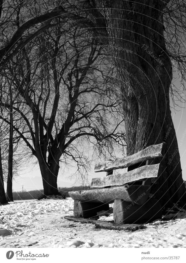 Moments of peace Tree Black White Relaxation Worm's-eye view Wood Bench Snow Sit