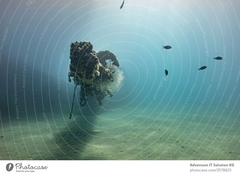 Plaster freighter off the coast of Calabria Underwater photo wreck diving Freediving Ocean Snorkeling Dive Vacation & Travel sea from below Sea water