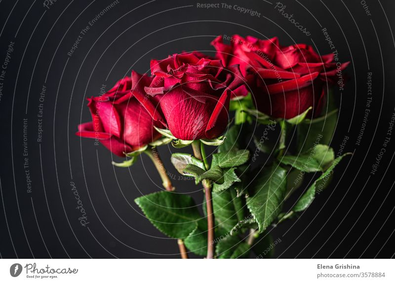 Red roses on a black background. red march 8 dark bouquet holiday mother birthday marriage celebration anniversary romance romantic floral gift valentine flower