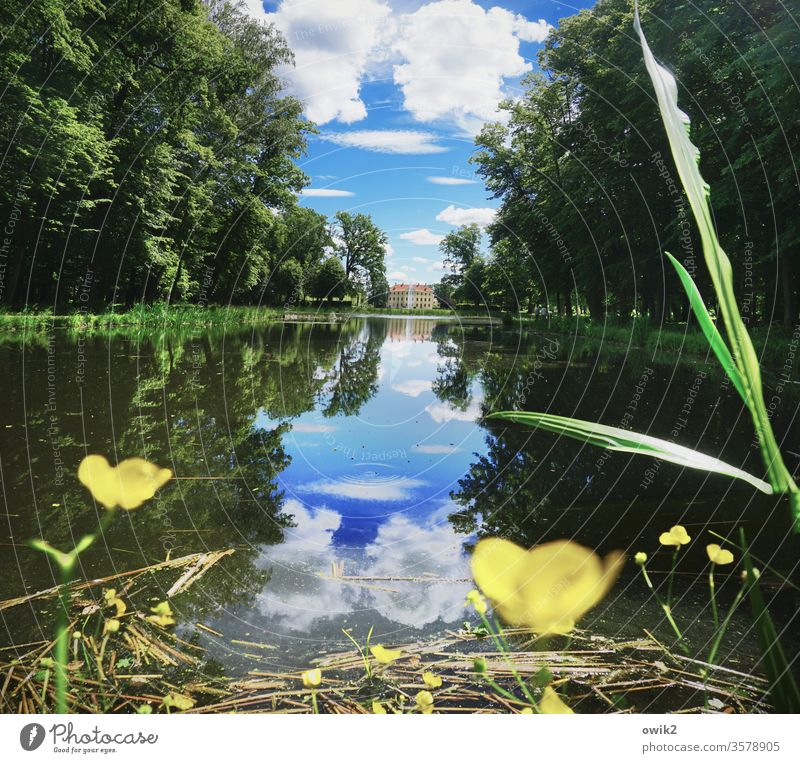 lake view Park Pond huts Forest Water blade of grass buttercups Reflection Water reflection windless Lake Nature Exterior shot Deserted Colour photo