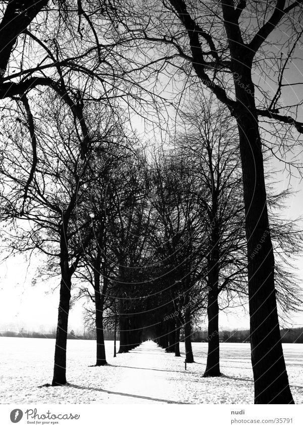 Sky White Tree Black Far-off places Forest Snow Lanes & trails Horizon