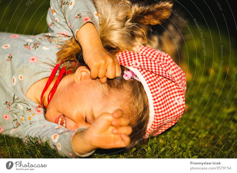Portrait of a beautiful little 2 years old girl lying on grass and laughing with york terrier. kid licking childhood cute playing dog pets expression yorkshire