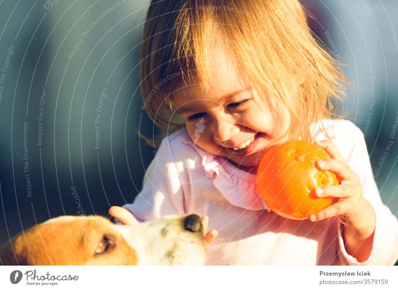 Little girl child playing in sunny day in backyard with her best friend beagle dog. Beagle Child Family Outdoors Summer adorable animal autumn baby background