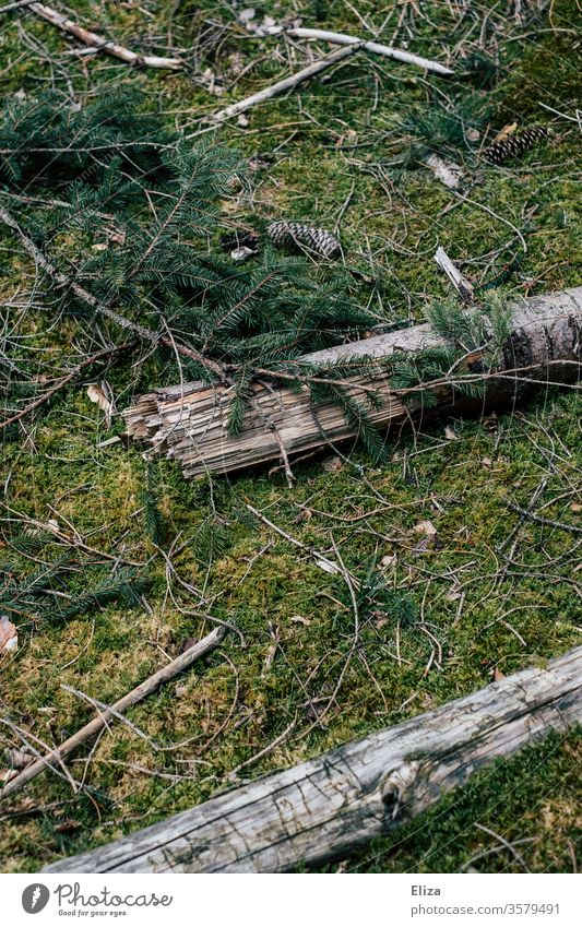 Moss-covered forest floor with branches, twigs and fir cones Forest forest soils texture green moss-covered Fir cone Brittle wood birch Birch branches