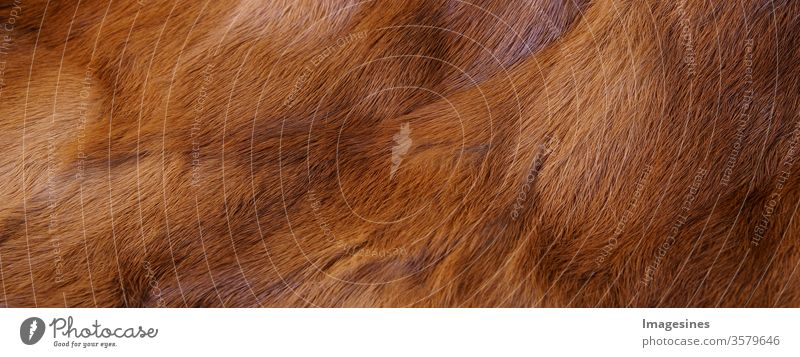 Rabbit fur reddish brown background texture. Fur background brown. Close up of a coat - garment. Animal fur background. Full frame of natural fur coat. Panorama