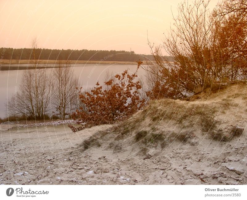 Evening at the lake Lake Lower Saxony Sunset Tree Winter Loneliness Calm Sand